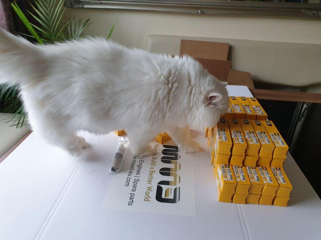 CAT Spark Plug1